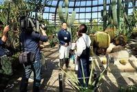テレビ収録とサボテン - 手柄山温室植物園ブログ 『山の上から花だより』