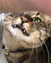 宇宙との交信!トラちゃんの5月占い - 猫丸ねずみの大荒れトーク