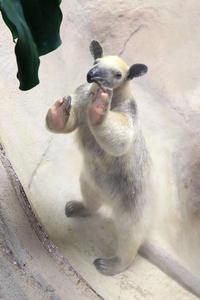4月30日(月) 焦燥 - ほのぼの動物写真日記