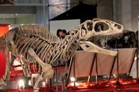 ギガ恐竜展2017:日本で繁栄した恐竜たち - 続々・動物園ありマス。