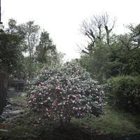 旅メモ*静岡焼津→富士山 - 絵×写真日記
