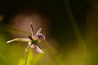 第18候牡丹の花咲き始める - Wind Tribe Story