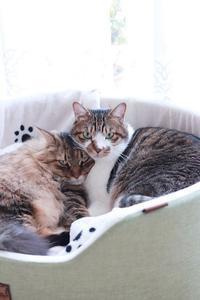 弟妹にモテる猫 - きょうだい猫と仲良し暮らし
