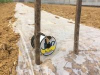 エダマメの防鳥対策 - 週末農夫コーディーのイケてる鍬の振るい方