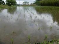 ゴールデンウイーク三日目、突然の雨 - 千葉県いすみ環境と文化のさとセンター