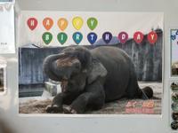 ふくちゃん誕生日会と皆さまへの感謝 - ボルネオゾウのふくちゃん ~ふくちゃんへの恩返し~