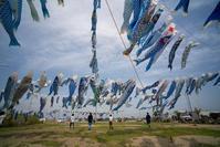 #3187 青い鯉のぼりプロジェクト2018-2 - 14番目の月
