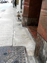 西營盤の猫店長? - 香港貧乏旅日記 時々レスリー・チャン