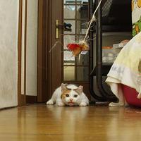 LOCK ON!!!!!!!!!! - ぶつぶつ独り言2(うちの猫ら2018)