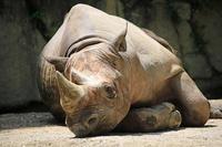 お昼寝中 - 動物園のど!