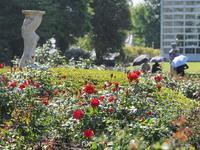 神代植物公園の薔薇早くも開花! - 柳に雪折れなし!Ⅱ