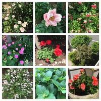 春の恵み - 瑠璃色の庭