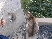 死の貌三島由紀夫の真実 - シェークスピアの猫