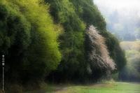 里山の春 その2 - Illusion on the Borderline  II @へなちょこ魔術師