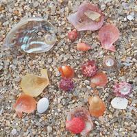 貝の名前について。 - on the shore