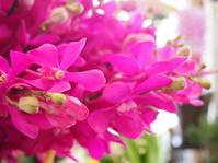 フラワールーシュお花の会☆5月レッスンのお知らせ - ルーシュの花仕事