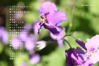 手が届くところ - Poetry Garden 詩庭