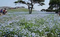 国営ひたち海浜公園 - 操の気まぐれ日記