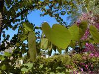 若葉の季節(GW前半) - 風路のこぶちさわ日記