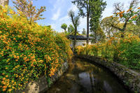 山吹咲き乱れる松尾大社 - 花景色-K.W.C. PhotoBlog