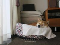 中休み - yamatoのひとりごと