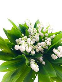 幸せのおすそ分け:今年もすずらんが咲きました - **おやつのお花*   きれい 可愛い いとおしいをデザインしましょう♪