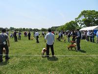 日本犬保存会九州連合展行ってきました - 柴と徒然日記
