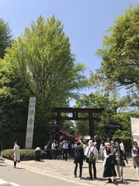 根津神社のつつじ - まましまのひとり言