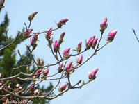 樹の花 - Photo Album