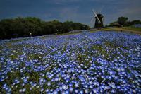 花博記念公園鶴見緑地 - 写真を主とした日記です