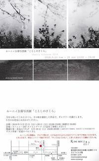 日本橋 Roonee 247 fine arts 「ことしのさくら」展に出展します - 節操のない写真館