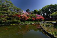 咲き急ぐ初夏の花達@梅宮大社 其の二 - デジタルな鍛冶屋の写真歩記