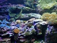 サンシャイン水族館~クマノミとイソギンチャクの海 - 続々・動物園ありマス。