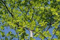 新緑の森でお弁当ひろげましょう! - YUKKESCRAP
