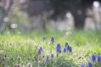 春の目醒め - 光の贈りもの