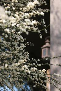 花の終わり - CHIROのお庭しごと