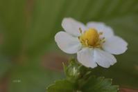 ちっぽけ - CHIROのお庭しごと