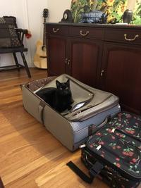 スーツケースが沈んでるw - にゃんこと暮らす・アメリカ・アパート(その2)
