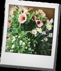 ペチュニアの寄せ植え・・・母の日の - khh style