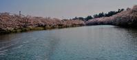 2018'sakuraサクラ桜(弘前公園) - お茶にしませんか