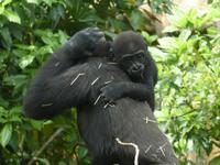リキ君とお姉ちゃんたち - 動物園に嵌り中