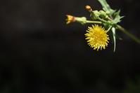 アスファルトに咲く4 - (=^・^=)の部屋 写真館