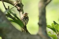 山散歩で合った鳥さんたち・1♪ - happy-cafe*vol.2