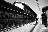 丹波口(たんばぐち)散歩写真 - 牛の散歩写真・関西版