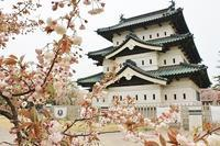 弘前公園の桜_2018.05.02 - 弘前感交劇場