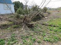伐採木玉切り作業。 - あいやばばライフ