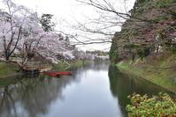 東北三県桜旅3.弘前公園 - 高原に行きたい