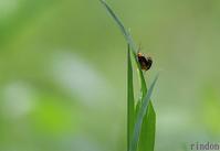 虫たちの忙しい春 - 旅のかほり