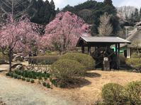 高蔵寺さくらまつり - Eriha Hatakeyama Official Blog
