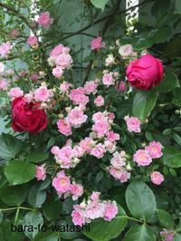 バラのコラボレーション - バラと私と時々、カルトナージュ